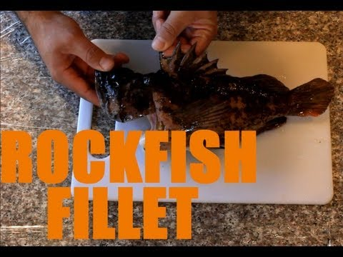 How to Fillet Rockfish using Rapala Electric Fillet Knife