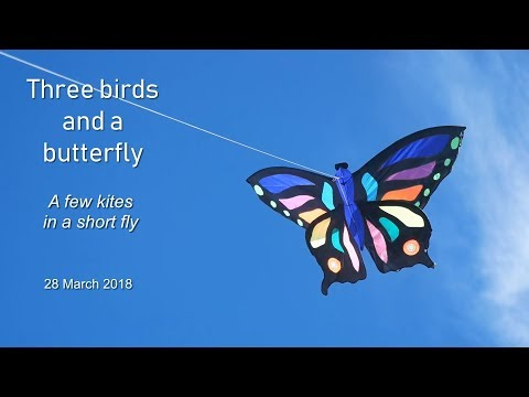 Three birds and a butterfly - a few kites in a short fly