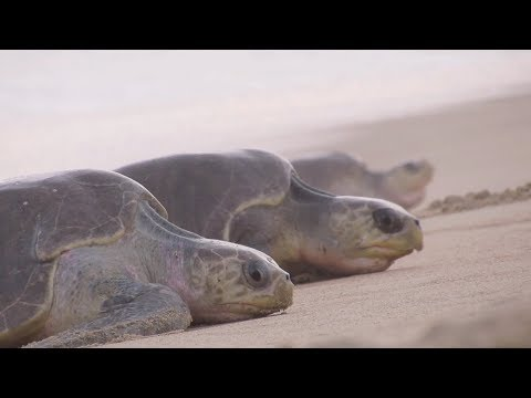 4Ocean Partners with FAU® Marine Research Lab to Help Sea Turtles