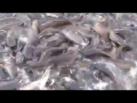 Amazing Group of Fish !