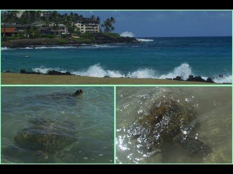 Hawaii Day 11! SEA TURTLES - UP CLOSE & PERSONAL!
