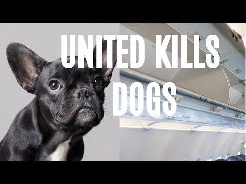 United Kills Dogs