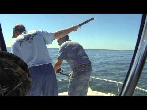 Atlantic Beach King Mackerel Fishing North West Places