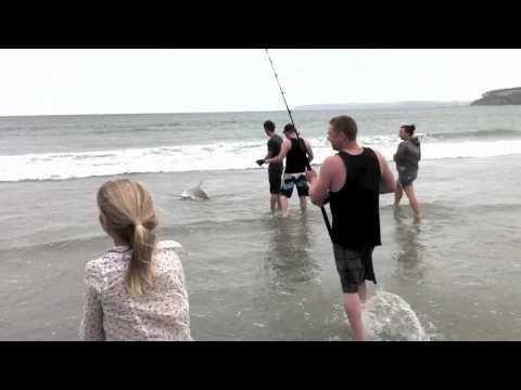 Shark Catch - Omaha Beach - 27 Dec 2010