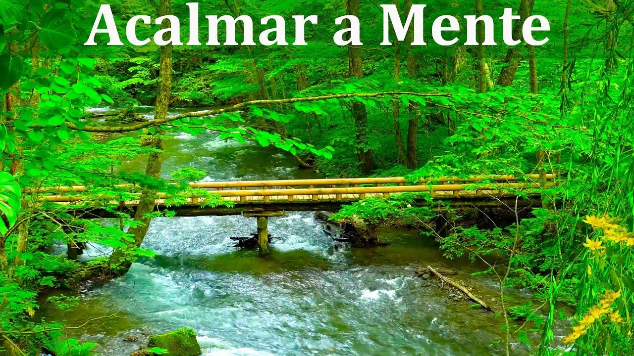 Música para Meditar e Relaxar com Sons de Riacho e Natureza - Acalmar os Pensamentos