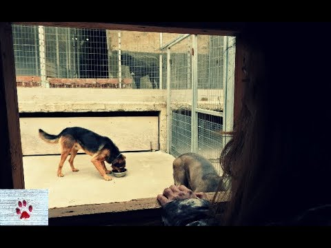 An odd couple - love in a dog shelter