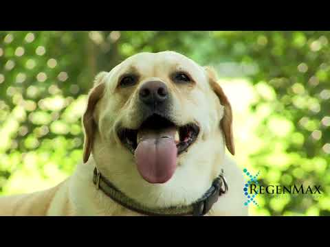RegenMax™ Injection Therapy for Animals | Stem Cell Therapy for Dogs