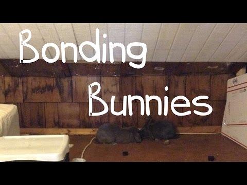 Bonding My Bunnies VLOG (read description)