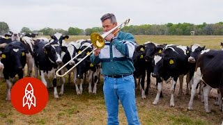 Playing Jazz for Cows