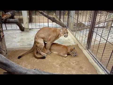Xxx Mp4 他の動物と動物交配:犬の交配面白いコンパイルビデオでスーパーキャット 3gp Sex