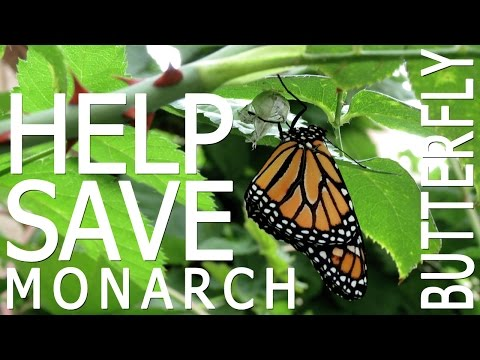 Save The Monarch Butterfly By Growing Milkweed + Spring Giveaway!
