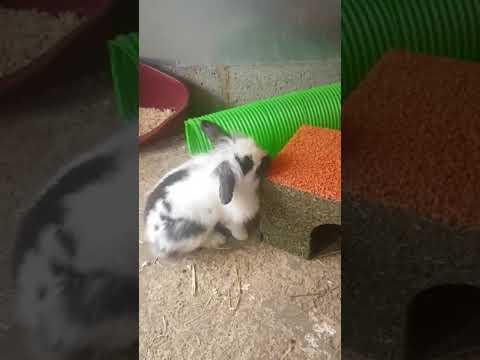 Chester enjoyijng his new hide treat