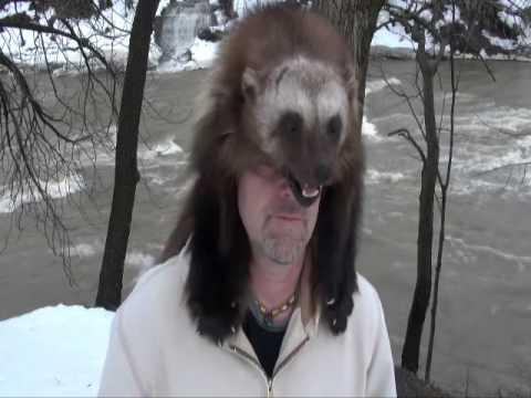 Wolverine fur hat