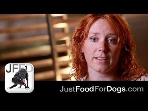 Ask The Experts: How Do I Treat A Dog With Epilepsy? | JustFoodForDogs