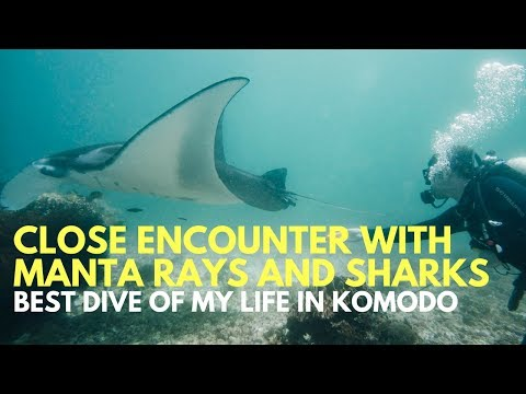 SCUBA DIVING WITH MANTA RAYS AND SHARKS IN KOMODO ISLAND - FLORES INDONESIA