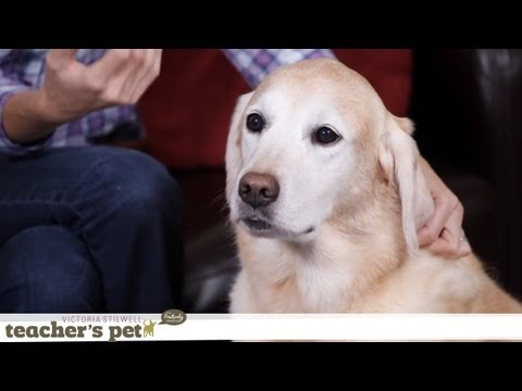 How to Combat Your Dog's Boredom | Teacher's Pet With Victoria Stilwell