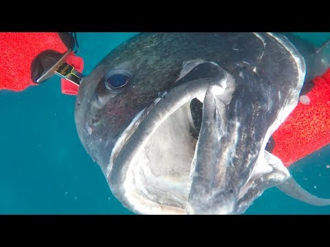 Spearfishing Christmas Island 2018 with Red Sea Ocean Adventures