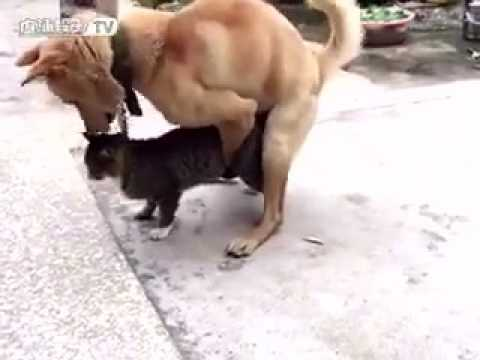 Dog and girl has real Sex -