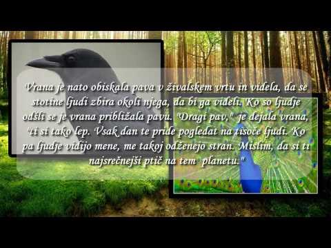 Poučne Zgodbe - Kdo je srečen? Pav in Vrana