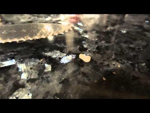 small amoeba-like worm or fluke? parasite from dog