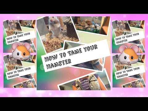 How to tame your hamster