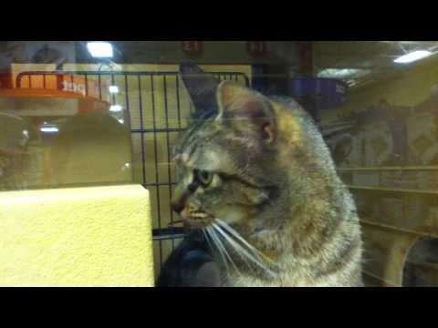 Adopt a Cat at PetSmart!