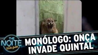 Monólogo: Onça invade quintal de casa em Santa Catarina | The Noite (13/11/17)