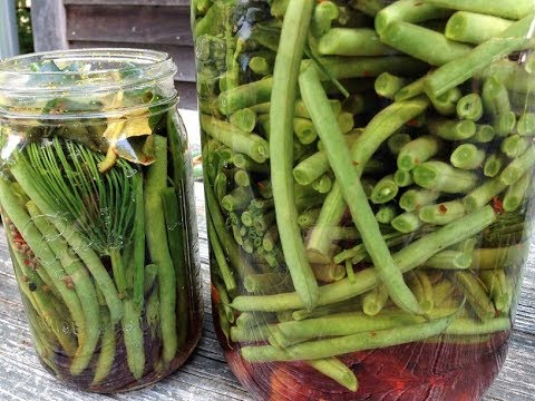 Making Fermented Dilly Beans at Shundahai Farm