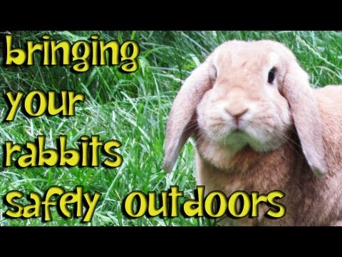 BudgetBunny: How To Safely Bring Your Rabbit Outdoors