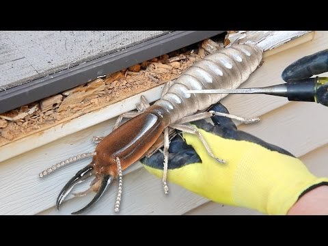 Wet Rot Or Termites