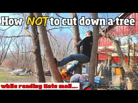 How NOT to cut down a tree.....6 common Mistakes & I read Hate mail