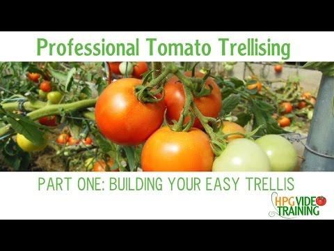 How to Build a Trellis -Easy PVC Tomato Trellis Part One