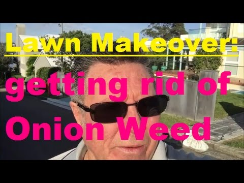 Lawn Makeover [Getting Rid Of Onion Weed] [Onion Weed Control] [Get Rid Of Weeds In Lawn]