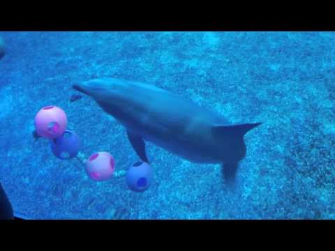 Dolphins in Epcot