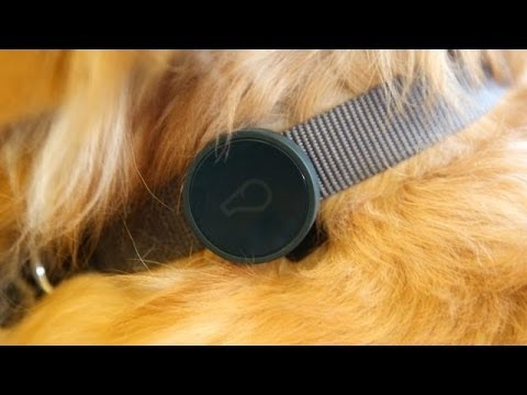 Whistle's New 'Find My Dog' GPS Device