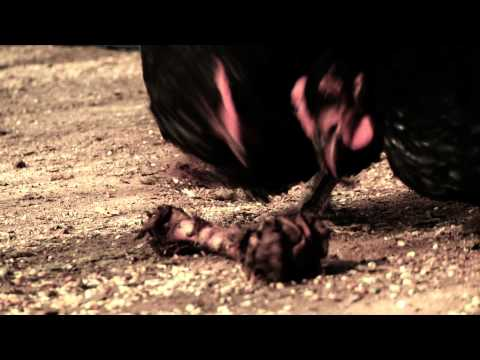 Wacky Political Ad Watch: Herman Cain's Killer Chickens