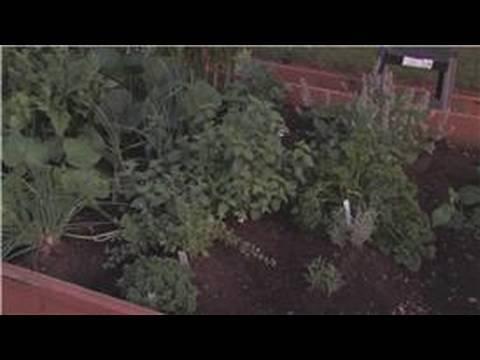 Edible Gardening : How to Plant a Winter Vegetable Garden