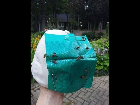 DIY Biting Fly Trap Hat - Cheap, Easy and It Works!