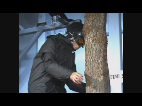 What happens when you ski into a tree at 30kph?
