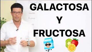 GlucÓlisis ( Galactosa Y Fructosa ) #bioquímica