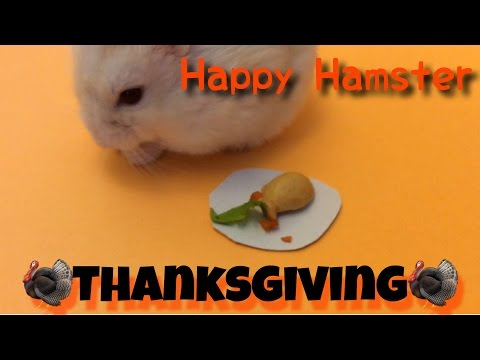 Happy Hamster Thanksgiving!
