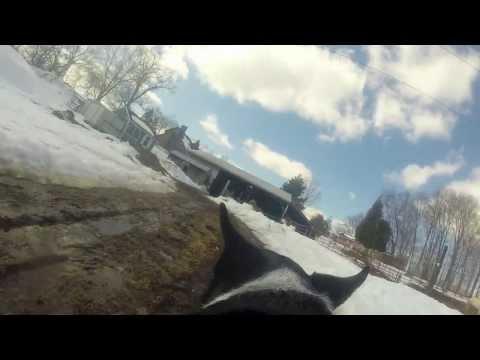 Making a GoPro Dog Harness Camera Mount