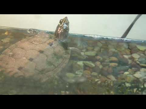 Several Different Turtle Species