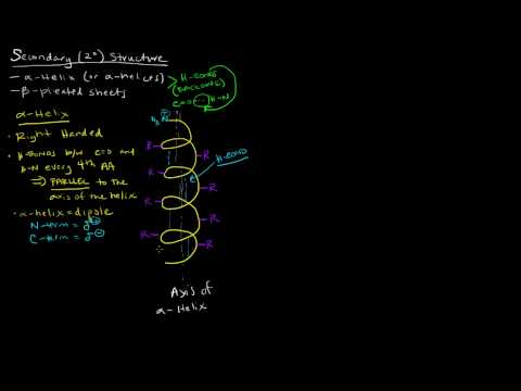 Protein Structure (Part 2 of 4) - Secondary Structure - Alpha Helix