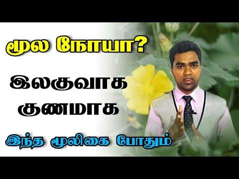 மூல நோய் நீங்க இந்த மூலிகை போதும் | Moolam kunamaka | piles treatment in tamil