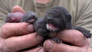 Puppy and Baby Mink Updates!