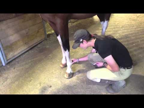 How to Take a Horse's Digital Pulse
