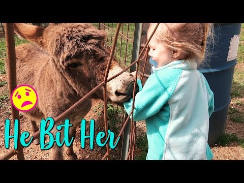 A DONKEY BIT MY TODDLER-Old Navy and Kohls Kids Clothing Haul-Day In The Life Vlog