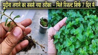 पुदीना का पौधा लगाने का जोरदार तरीका - 7 दिन में मिले 100 % रिजल्ट L Best Method To Grow Mint Plant