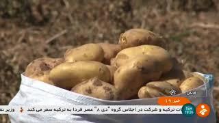Iran Potato harvest, Fereydan county برداشت سيب زميني شهرستان فريدن ايران